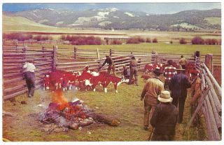 1950s COWBOYS Branding Irons CATTLE RANCH Photo Postcard COLORADO