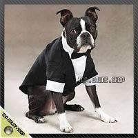 SUIT TUXEDO WEDDING Costume Dog Cat Pet 22 30lb Beagle Dachshunds