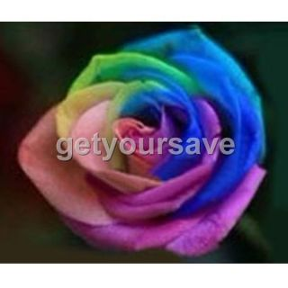 Rose seed 9 Color Colorful Seeds Rainbow Rose Seed Home Garden Flower