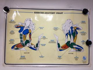 Original Vintage Exercise Anatomy Chart Health Work Out Poster P10