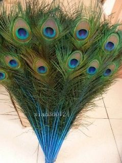 blue peacock feathers in Feathers