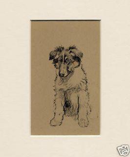 COLLIE PUPPY Lovely Original Vintage Dog Print by Cecil Aldin 1934