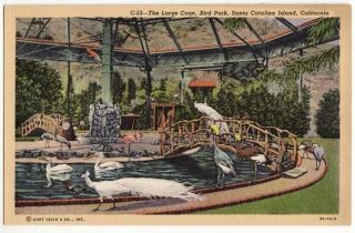 Post Card Large Cage Bird Park Catalina Island CA