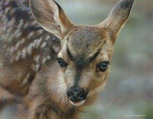 Deer Fawn Baby Limited Edition Print Carl Brenders Like Bateman