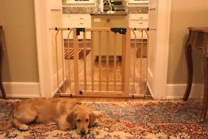 Cardinal Auto Lock Pressure Wood Pet Dog Gates