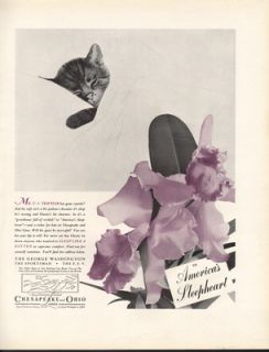 FA 1936 Chesapeake Ohio Railroad Railway Chessie Cat Kitten Orchid