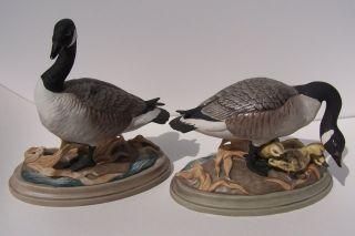 Canada Geese 408 Pair Figurines Gander GOOSE Goslings Birds