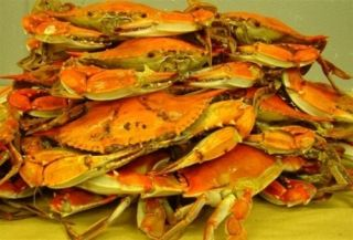 Dozen Maryland Steamed Jumbo Crabs Chesapeake Bay Bluecrabs Fresh