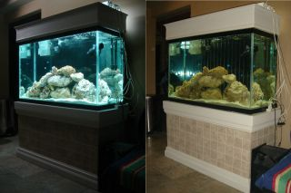 Tall Custom Fish Tank Glass Tank Custom Stand Custom Hood