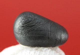 Geoff of Meteorite Men Sikhote Alin Oriented Bullet