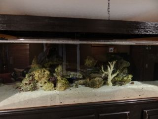 600 gallon acrylic aquarium w/ custom stand and LED light fixture