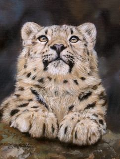 Snow Leopard New David Stribbling Wildlife Oil Painting