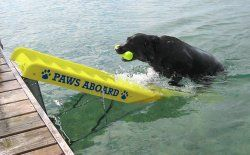 Pet Dog Doggy Boat and Dock Ladder Ramp Safety Steps 5200