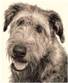 Irish Wolfhound Dog Complete Counted Cross Stitch Kit