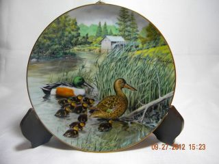 Edwin Knowles Collector Plate Jerners Ducks The Northern Shoveler Bart