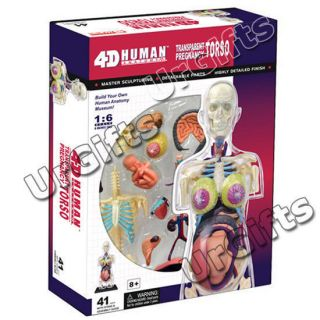 4D Puzzle Human Anatomy 3D Model Transparent Pregnancy Female Torso