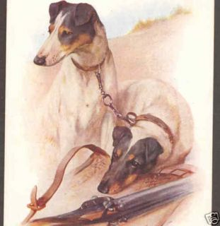 Fox Terrier Dogs Hunting Rifle Wardle Vintage Postcard