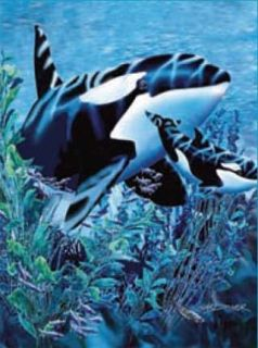 New Signature Collection Orcas Killer Whale Korean Mink Blanket Queen