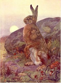 Rabbit Hare, 100+ Yr old Antique Color Print, Winifred Austen