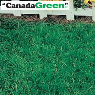 Canada Green Grass Seed 2 lb Bag   For Perfect Lawn New 2 pound 2lb