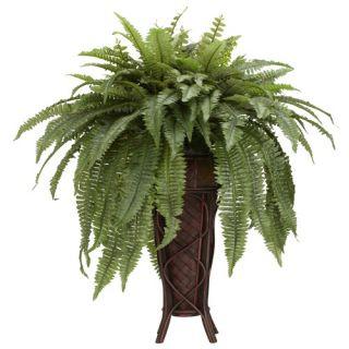 Indoor Plants Indoor Plants Online