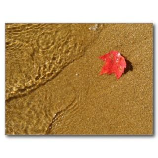 Red Leaf on Sand Postcards