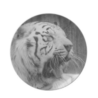 South China White Tiger Plate