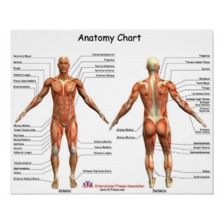 IFA Anatomy Chart to post in a gym or home.