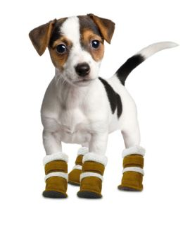 Hugs Pet Products Pugz Shoes for Dogs