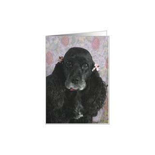 Boo the American Cocker Spaniel Card: Office Products