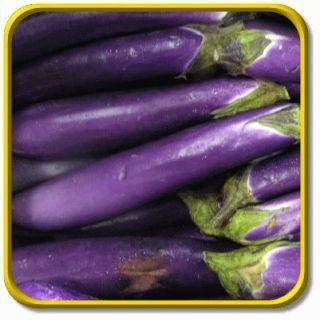 lb Long Purple Bulk Eggplant Seeds