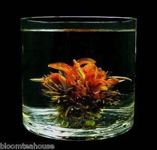 Bloom Tea Set Glass Teapot Warmer 6 Blooming Flowering