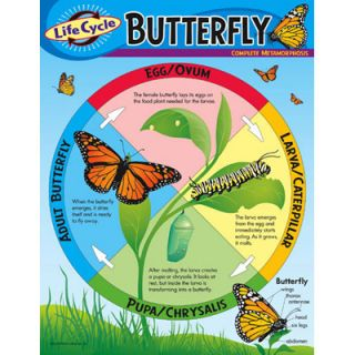 Life Cycle Butterfly Science Trend Poster Chart New