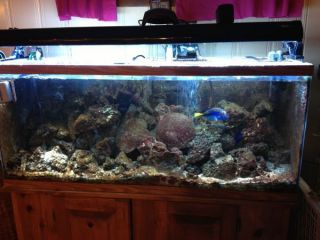 Complete Working 55 Gallon Marine Fish Tank with Livestock