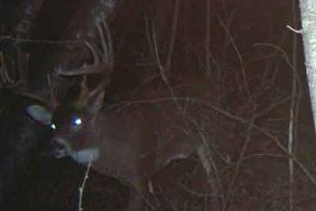 Antleroid Deer Mineral Hunting Trail Camera Attractant Antler 35lb
