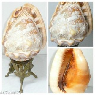 CARVED CAMEO CONCH SHELL APOLLO IN CHARIOT 4 HORSES LAMP & BASE