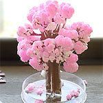 Magic Japanese Sakura Cherry Blossom Mini Tree